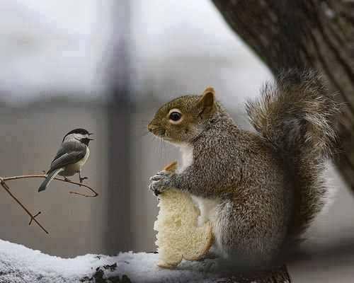 ecureuil et oiseau