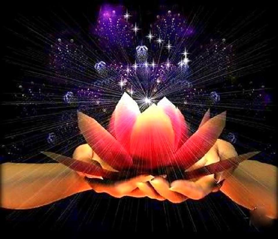 lotus_mains