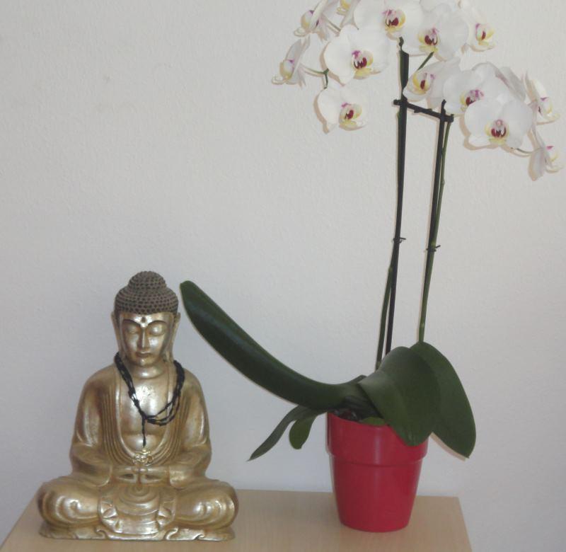 yoganice_details